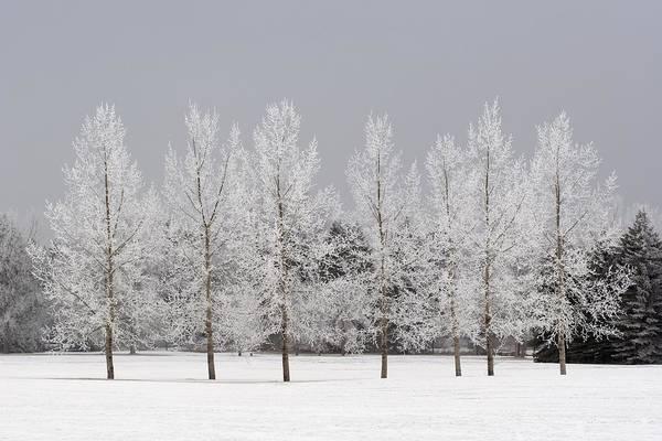 Bare Tree Art Print featuring the photograph Winter, Calgary, Alberta, Canada by Michael Interisano