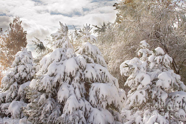 Winter Art Print featuring the photograph Winter Wonderland by James BO Insogna