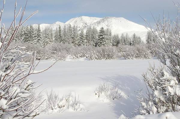 Winter Print featuring the relief Winter Wonderland Windy Mountain Wyoming by Sherri Meikle