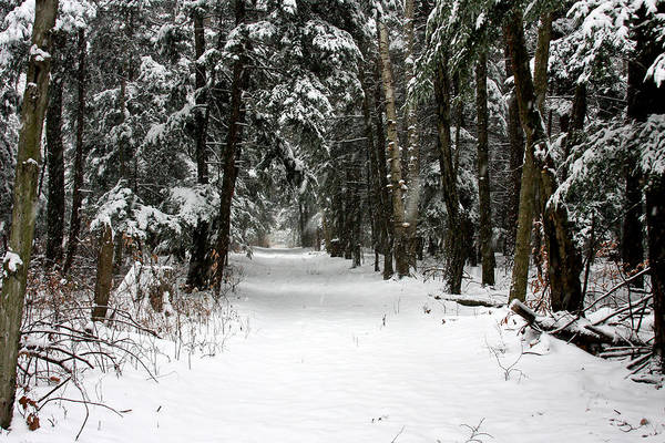 Snow Art Print featuring the photograph Winter's Path by Darlene Chissom
