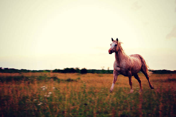 Horse Art Print featuring the photograph With The Wind by Amy Schauland