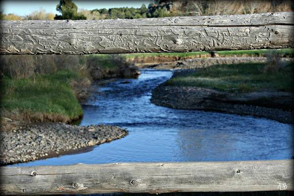 Water Art Print featuring the photograph Wooden Fence by Treena Bridges