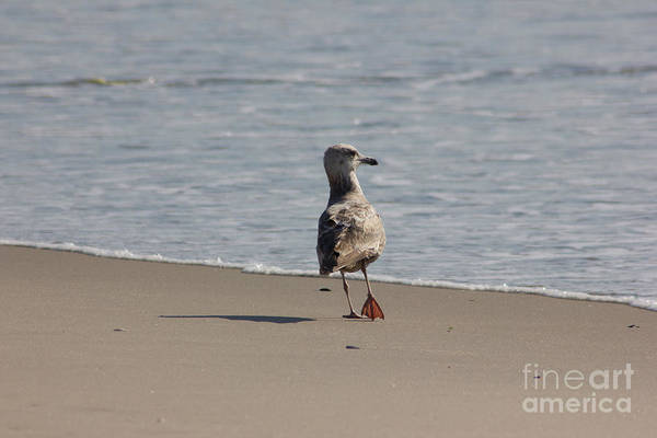 Ocean Art Print featuring the photograph Wounded Bird 6 Hurt Tired Calm Ocean Beach Photos Pictures Bird Seagulls Oceanview Beaches Water Sea by Pictures HDR