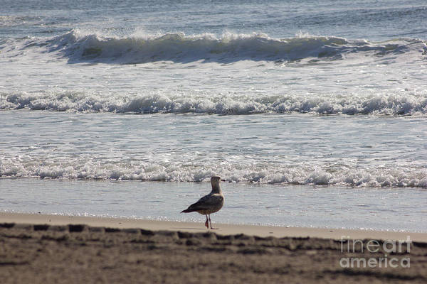Wounded Seagull 4 Art Print featuring the photograph Wounded Seagull 4 Seagulls Birds Photos Beach Beaches Sea Ocean Oceanview Scenic Seaview Art Pics by Pictures HDR