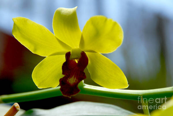 Flower Print featuring the photograph Yellow Beauty by Pravine Chester