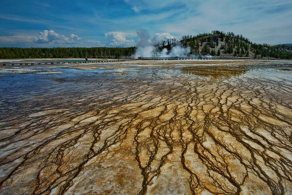 Yellowstone National Park Print featuring the photograph Yellowstone Blood Vessels by Dan Mihai