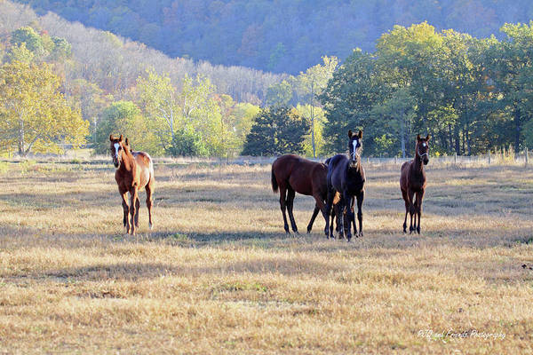 Thorougbred Race Horse Art Print featuring the photograph 'youngsters In The Paddock' by PJQandFriends Photography