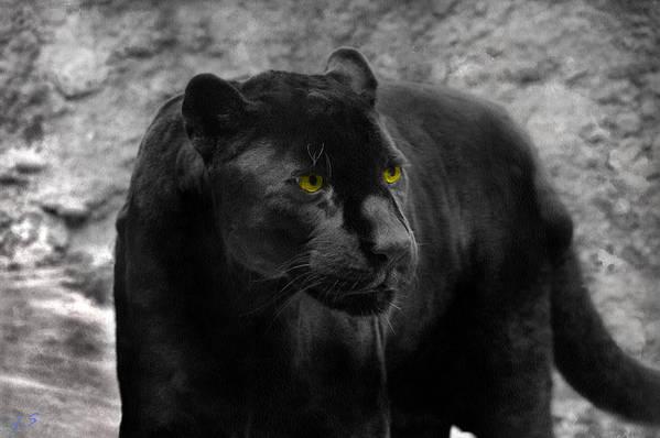 Black Art Print featuring the photograph Black Leopard by Sergey Lukashin