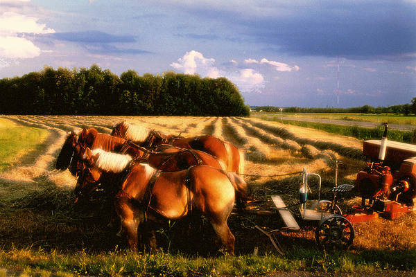 Harvest Art Print featuring the photograph Amish Hay Rig by Roger Soule