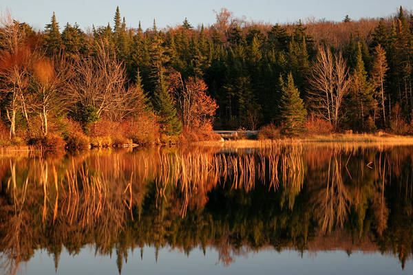 Adirondacks Art Print featuring the photograph Autumn Lake by Kate Leikin