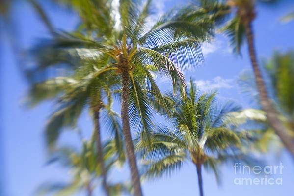 Blue Art Print featuring the photograph Blurry Palms by Ron Dahlquist - Printscapes