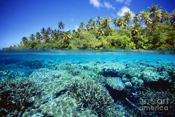 Above Art Print featuring the photograph Caroline Islands, Pohnpei by Dave Fleetham - Printscapes
