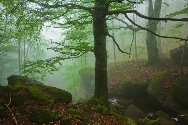 Fog Art Print featuring the photograph Dark Forest by Evgeni Dinev