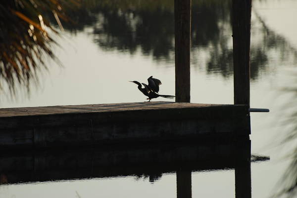 Reflections Art Print featuring the photograph Dock Bird by Rob Hans