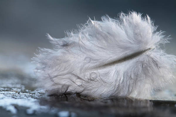 Feather Art Print featuring the photograph Feather by Magdalena Bujak