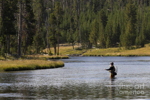 Fly Fishing Art Print featuring the photograph Fly Fishing In The Firehole River Yellowstone by Dustin K Ryan