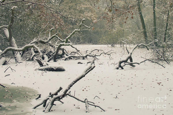 Countryside Art Print featuring the photograph Frozen Fallen by Andy Smy