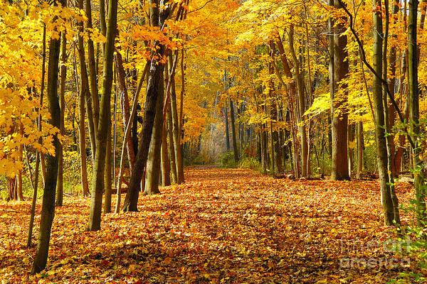 Foliage Art Print featuring the photograph Golden Days by Neil Doren