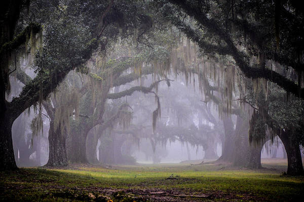 Landscape Art Print featuring the photograph Greenwood's Oak Alley by Bonnie Marquette