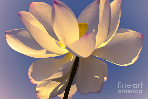 Outdoors Art Print featuring the photograph Lilies Of The Water V by Irene Abdou