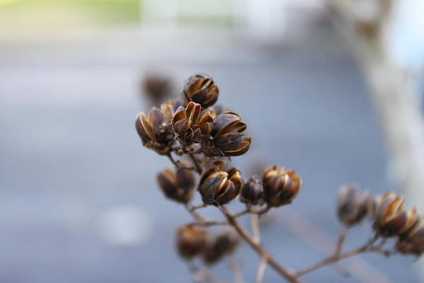 Seed Pods Art Print featuring the photograph Pods by Evelyn Patrick