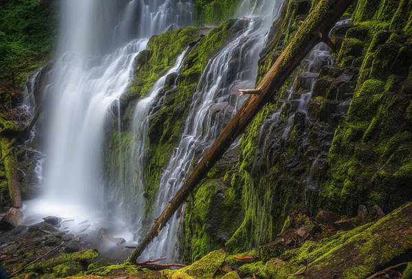 Water Art Print featuring the photograph Proxy Falls by Cat Connor