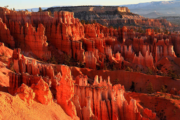 Bryce Art Print featuring the photograph Red Glow On Hoodoos Of Bryce Canyon by Pierre Leclerc Photography