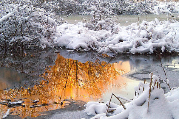 Reflections Art Print featuring the photograph Reflections In Melting Snow by Neil Doren