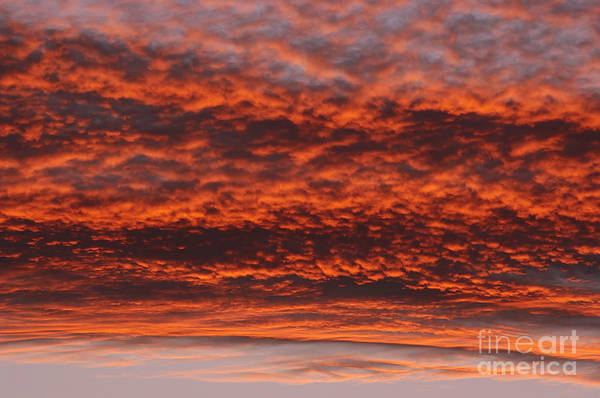 Rosy Sky Art Print featuring the photograph Rosy Sky by Michal Boubin
