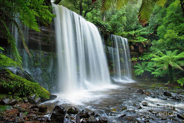 Waterfall Art Print featuring the photograph Russell Falls by Dennis Harding