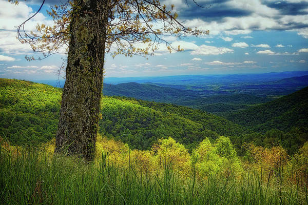 Bold Art Print featuring the photograph Shenandoah Valley Np by Ronn Orenstein