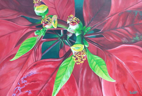 Poinsettia Art Print featuring the painting Still Thriving In May by Tammy Watt