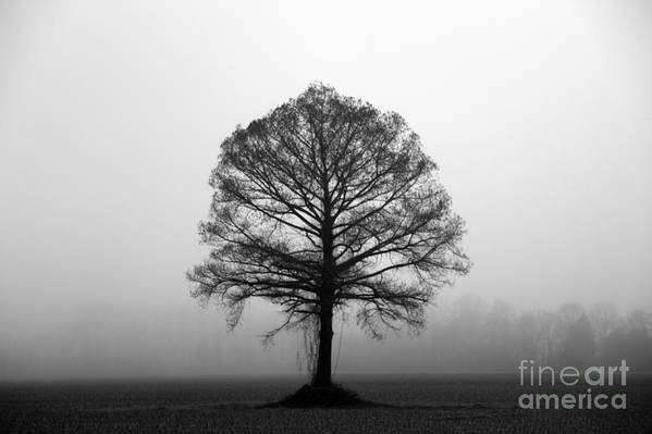 Tree Art Print featuring the photograph The Tree by Amanda Barcon