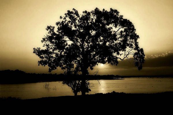 Tree Art Print featuring the photograph Tones Of Home by Karen M Scovill