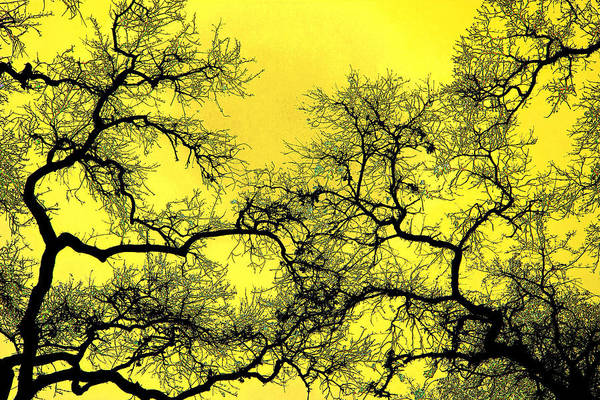 Digital Art Art Print featuring the photograph Tree Fantasy 18 by Lee Santa