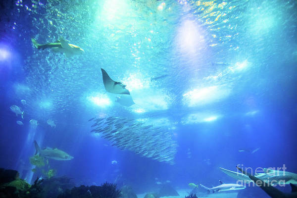 Underwater Art Print featuring the photograph Undersea Deep Background by Benny Marty