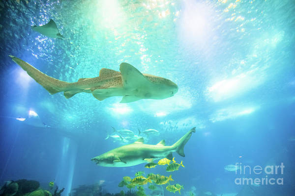 Underwater Art Print featuring the photograph Undersea Shark Background by Benny Marty