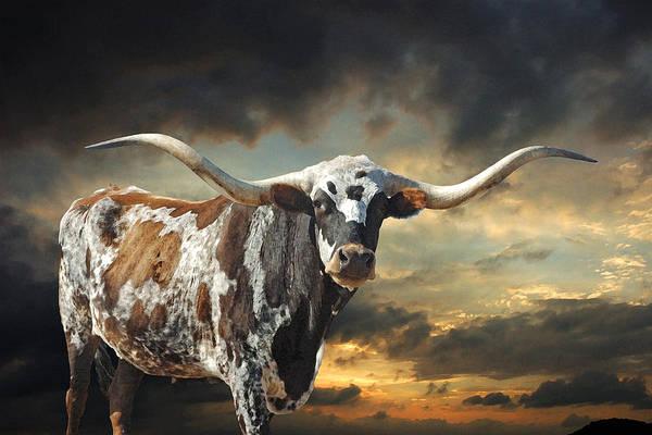 Texas Longhorn Art Print featuring the photograph West Of El Segundo by Robert Anschutz