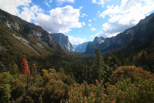 Yosemite Art Print featuring the photograph Yosemite by Calvin Roberts Photography