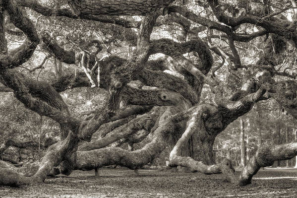 Angel Oak Art Print featuring the photograph Angel Oak Live Oak Tree by Dustin K Ryan