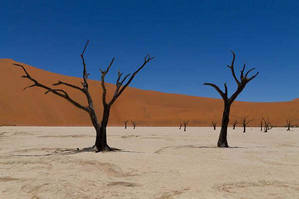 Kalahari Desert Art Print featuring the photograph Dead Vlei by Davide Guidolin