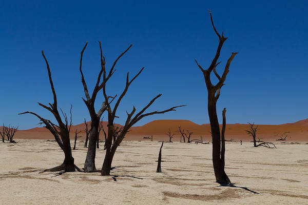Kalahari Desert Art Print featuring the photograph Dead Vlei by Davide Guidolin
