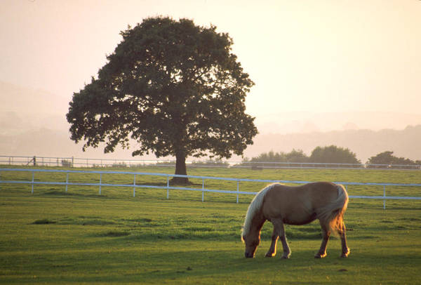 Green Grass Art Print featuring the photograph Irish Horse In The Gloaming by Carl Purcell
