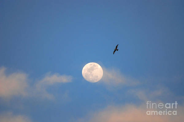 Moon Art Print featuring the photograph 2- Moon Bird by Joseph Keane
