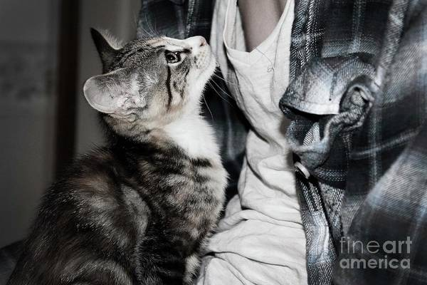 Kitten And Owner Art Print featuring the photograph Photography by Jayde Rowley
