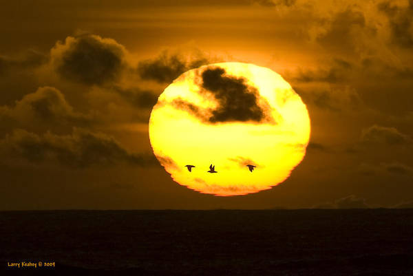 Sun Art Print featuring the photograph 3 Gulls by Larry Keahey