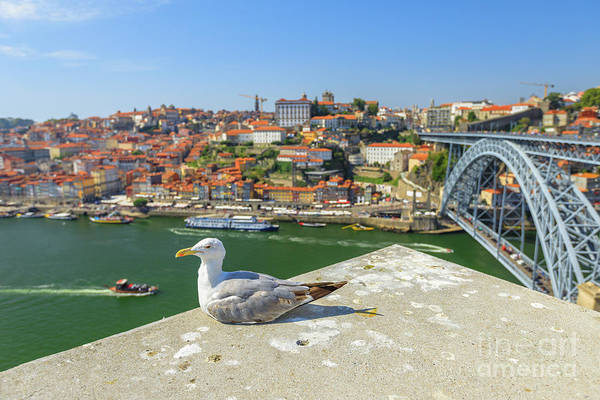 Porto Art Print featuring the photograph Porto Skyline Seagull by Benny Marty