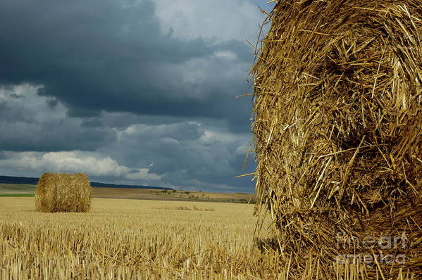 Agricultural Art Print featuring the photograph Hay Bales In Harvested Corn Field by Sami Sarkis