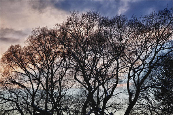 Trees Art Print featuring the photograph Sunset And Early Evening Nyc by Robert Ullmann