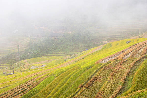 Terrace Art Print featuring the photograph Terrace Fields Scenery In Autumn by Carl Ning